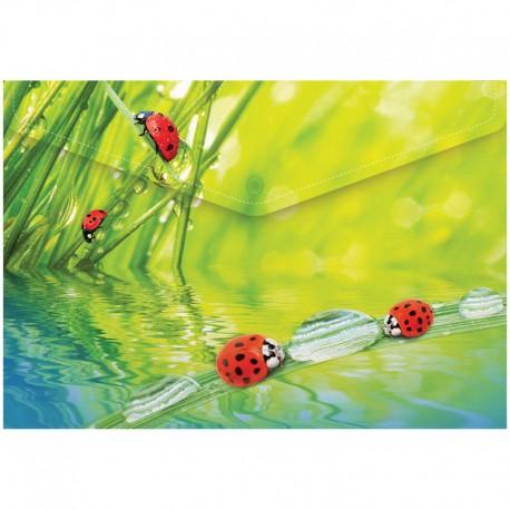 """Папка-конверт на кнопке А4 180мкм. BERLINGO """"Ladybird"""" (AKk 04032)"""